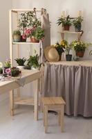 la casa del giardinaggio con le piante foto