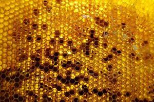 goccia di miele d'api gocciolamento da favi esagonali foto