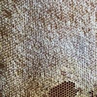la struttura esagonale è a nido d'ape dall'alveare pieno di miele dorato foto