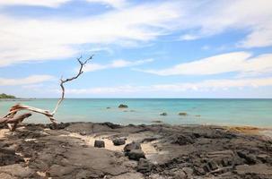 Legni e mare sulla grande isola della spiaggia di anaeho'omalu, hawaii foto