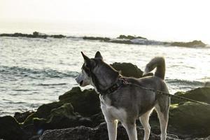 cane in spiaggia - newport ca 2018 foto