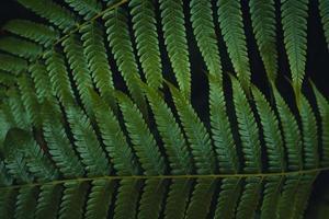foglie di felce scure nella stagione delle piogge tropicali foto