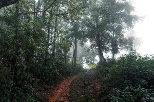 strada in una foresta tropicale, la strada nella foresta umida tropicale foto