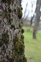 sfondo vecchia corteccia d'albero coperta foto