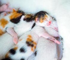 carino dolce gattino animale da compagnia foto