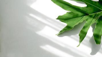 foglie verdi su sfondo bianco e sole foto