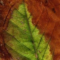modello di foglie di piante naturali foto