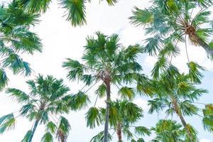 palma sullo sfondo del cielo: migliora lo stile di elaborazione del colore foto