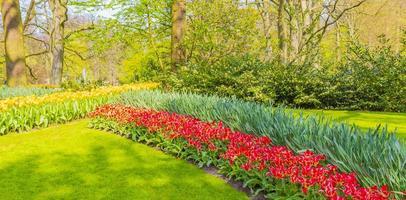 tulipani colorati narcisi nel parco keukenhof lisse olanda paesi bassi. foto