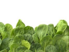 spinaci freschi pieni di nutrimento foto