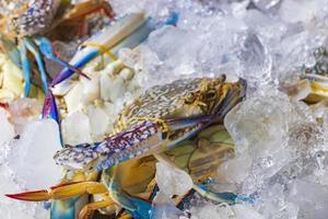 frutti di mare crudi tailandesi a koh samui, thailandia foto