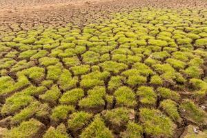 la terra con il terreno arido e il riscaldamento globale coperto d'erba foto