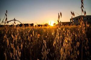 fosso erba al tramonto di un colore arancione foto