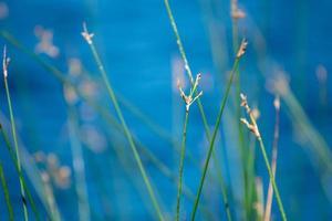 piante verdi astratte dal lago remoto foto