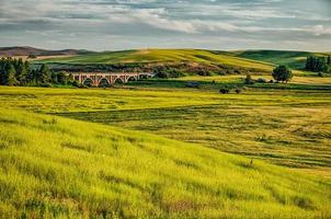 magici campi di grano a palouse washington foto