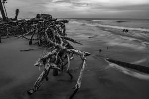 scene della spiaggia della Carolina del sud dell'isola di caccia foto