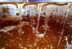 trama di fondo, gocce di dolce miele foto