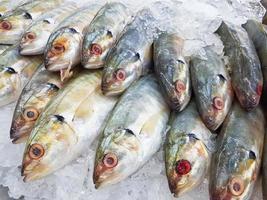 pesce sgombro fresco del primo piano su ghiaccio in supermercato foto