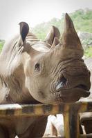 primo piano del rinoceronte nello zoo pubblico, foto