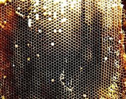 sfondo trama esagonale, nido d'ape in cera da un alveare foto