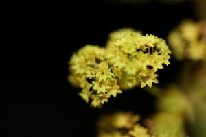 fiore fiore primo piano stampe di grandi dimensioni di alta qualità foto