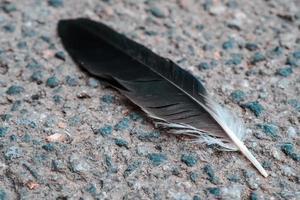 primo piano nero della piuma dell'uccello sull'asfalto strutturato all'aperto foto