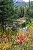 stagni di castori. area selvaggia della Bow Valley, alberta, canada foto
