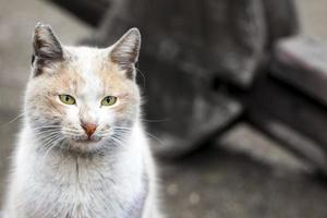 dolce animale domestico gatto foto