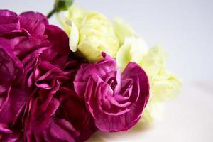 garofani rosa viola. posto per il testo. biglietto d'auguri. foto