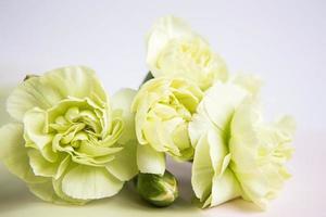 fiori gialli verdi su sfondo bianco lilla. biglietto d'auguri. foto