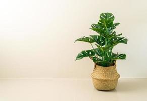 monstera in vaso cesto di vimini con parete foto