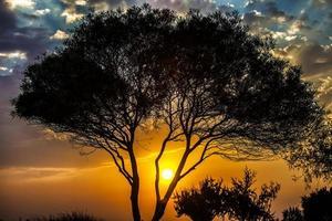 alberi in natura nel parco foto