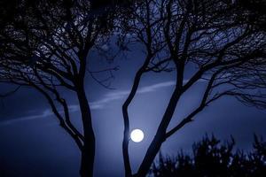alberi in natura nel parco di notte foto