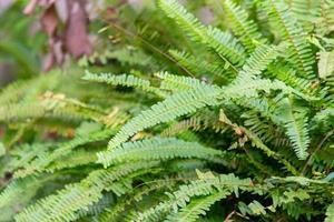 giardino con felci verdi a rio de janeiro, brasile foto