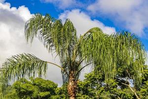 natura con palme dell'isola tropicale ilha grande brasile. foto