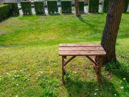 panca in legno vicino all'albero nel parco, illuminata dal sole foto