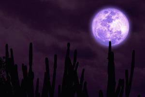 pieno raccolto luna viola silhouette albero di cactus nel cielo notturno del deserto foto