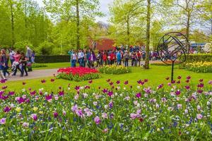 Lisse, Paesi Bassi, 20 aprile 2014 - tulipani colorati e narcisi nel parco dei tulipani di keukenhof foto