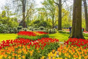 tulipani colorati narcisi nel parco keukenhof a lisse, Paesi Bassi. foto