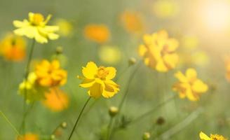 fiori all'alba foto