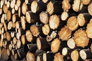 enorme mucchio di tronchi di legno tagliato foto