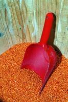 crudità legumi lenticchie foto