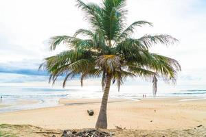 albero di cocco con spiaggia tropicale foto