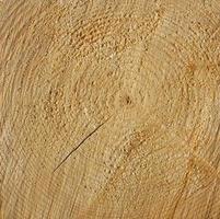 struttura di anelli di legno foto