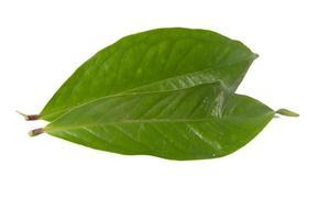 foglia di guava isolata su uno sfondo bianco foto