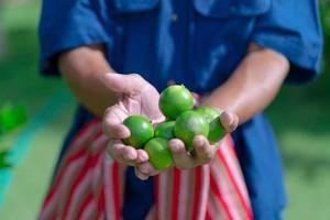 contadino che tiene in mano frutti di lime in fattoria foto