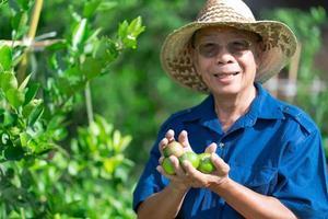 contadino asiatico anziano che tiene frutti di lime in fattoria foto
