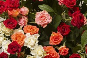 l'assortimento di bellissimi fiori sullo sfondo foto