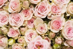 la composizione bellissimo sfondo di fiori foto