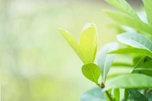 natura albero verde foglia fresca su bokeh morbido sfocato foto